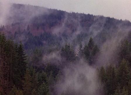 twin-peaks-trees-fog-785x570