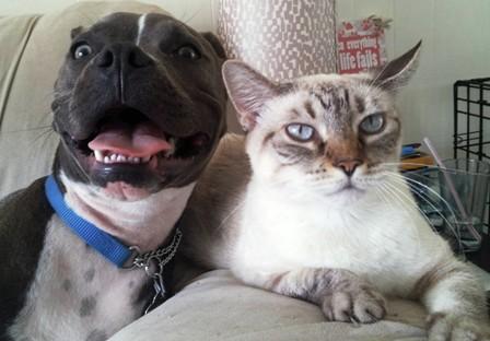 cat-and-pitbull